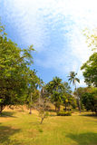 Beautiful tropical garden over blue sky Royalty Free Stock Photos