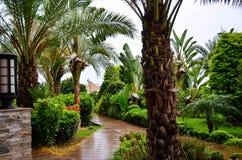 Beautiful  tropical garden  path. Oriental Garden view of Beautiful  tropical garden  path surrounded by tropical foliage Royalty Free Stock Photos