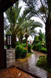 Beautiful  tropical garden  path Royalty Free Stock Photography