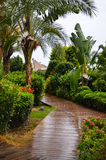 Beautiful  tropical garden  path Royalty Free Stock Images