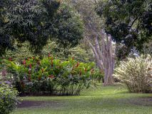 Beautiful tropical garden of southern Colombia. Tropical garden typical from the warm climate. Captured at the Andean mountains of southern Colombia stock photos