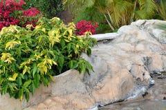 Beautiful tropical garden.Tenerife. Canary Island. Spain. Stock Image