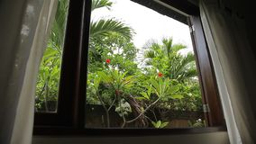Beautiful tropical garden view from the hotelroom window. Palms and hibiscus stock footage