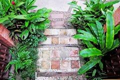 Beautiful tropical garden Stock Images