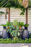 Beautiful tropical garden with white wooden fence. And different potted plants - dream of botanist Stock Photos