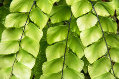 Beautiful tropical green plant Royalty Free Stock Images