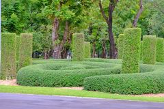 A beautiful tropical knot garden at the park in the city. Green nature background royalty free stock photos