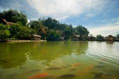 Beautiful tropical lake Royalty Free Stock Photos