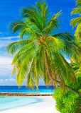 Beautiful tropical landscape Royalty Free Stock Photo