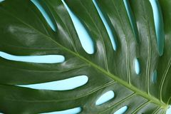 Beautiful tropical leaf as background royalty free stock photos