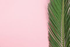Tropical leaf on color background. Beautiful tropical leaf on color background stock image