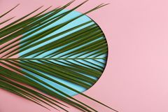 Beautiful tropical leaf on color background. Top view stock photos