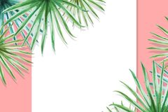 Beautiful tropical leaves border frame. Palm. Watercolor painting. White paper on pink backdrop. Exotic plant drawing. Natural print. Botanical composition stock illustration