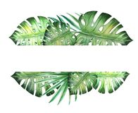 Beautiful tropical leaves text frame. Monstera, palm. Watercolor painting. royalty free illustration
