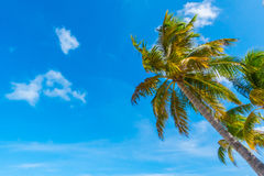 Beautiful tropical Maldives island, white sandy beach and sea  w Royalty Free Stock Images