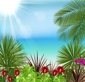Beautiful tropical in the morning with a tree and flowers Stock Photo