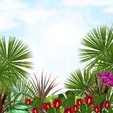 Beautiful tropical in the morning with a tree and flowers Royalty Free Stock Image