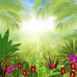 Beautiful tropical in the morning with a tree and flowers Royalty Free Stock Photography
