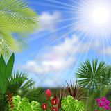 Beautiful tropical in the morning with a tree and flowers Stock Photos