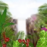 Beautiful tropical in the morning with a tree and flowers Stock Images
