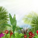 Beautiful tropical in the morning with a tree and flowers Stock Image