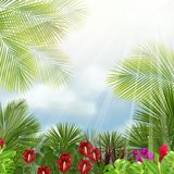 Beautiful tropical in the morning with a tree and flowers Stock Photography
