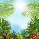 Beautiful tropical in the morning with a tree and flowers Royalty Free Stock Images