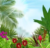 Beautiful tropical in the morning with a tree and flowers Royalty Free Stock Photos