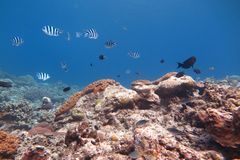 Beautiful tropical ocean Royalty Free Stock Photography