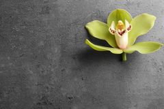 Beautiful tropical orchid flower on grey background. Space for text. Beautiful tropical orchid flower on grey background, top view. Space for text royalty free stock photography