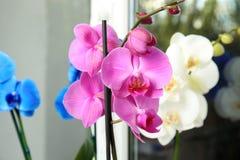 Beautiful tropical orchid flower near window glass. Closeup stock photos
