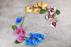 Beautiful tropical orchid flowers on grey background, top view. stock photography
