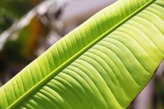 Beautiful tropical palm leaf. Closeup stock image
