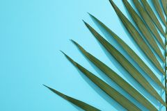 Beautiful tropical palm leaf on color background. Space for text royalty free stock images