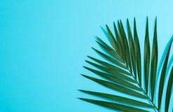Beautiful tropical palm leaf on color background. Space for text stock photos