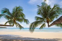 Free Beautiful Tropical Paradise White Beach And Coconut Palm Trees On Island. Beautiful Beach And Beautiful Palm Tree Summer Holiday Royalty Free Stock Photography - 213425917