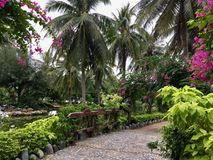 Beautiful tropical park. And a lot of plants, tall palm trees, flowering trees, pink flowers, stone paths, a small pond with greenish water Royalty Free Stock Photos
