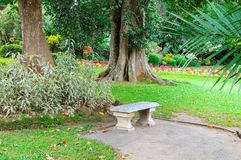 Beautiful tropical park and stone bench for relaxation. Stock Images