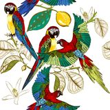 Beautiful tropical pattern with colorful parrots with lemon bran Stock Images