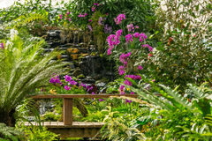 Beautiful tropical plants and flowers in Sirikit Botanical Garden royalty free stock photos