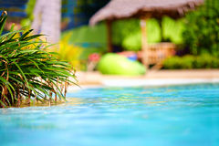 Beautiful tropical pool with thatch on background Stock Image