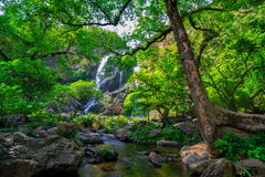 Beautiful tropical rainforest and stream in deep forest,. Phu Kradueng National Park, Thailand royalty free stock photo