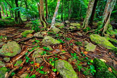 Beautiful tropical rainforest and stream in deep forest, Royalty Free Stock Image