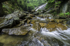 Beautiful tropical river surrounded by green forest. clear water and waves. Stock Images