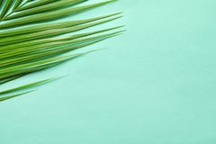Beautiful tropical Sago palm leaf on color background. Top view Royalty Free Stock Photo