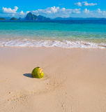 Beautiful tropical sand beach and coconut. Palawan, Philippines Stock Image
