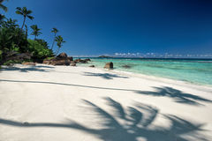 Beautiful tropical sandy beach with a shadow of the coconut palm tree Stock Photos