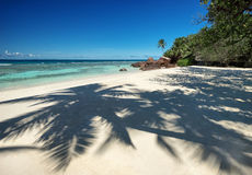 Beautiful tropical sandy beach with a shadow of the coconut palm trees Stock Photo