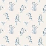 Beautiful tropical seamless pattern with different exotic birds sitting. On tree branches and flying on white background. Monochrome vector illustration for Royalty Free Stock Image