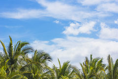 Beautiful Tropical Sunny Day Background. Tropical Palm tress on a gorgeous sunny day in the islands. Great travel background with lots of copy space stock image